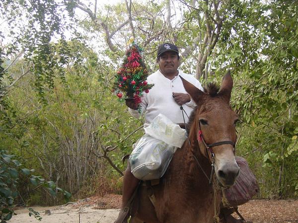 Artemio (local) bringing us our Christmas tree, Los Chonchos, Mexico