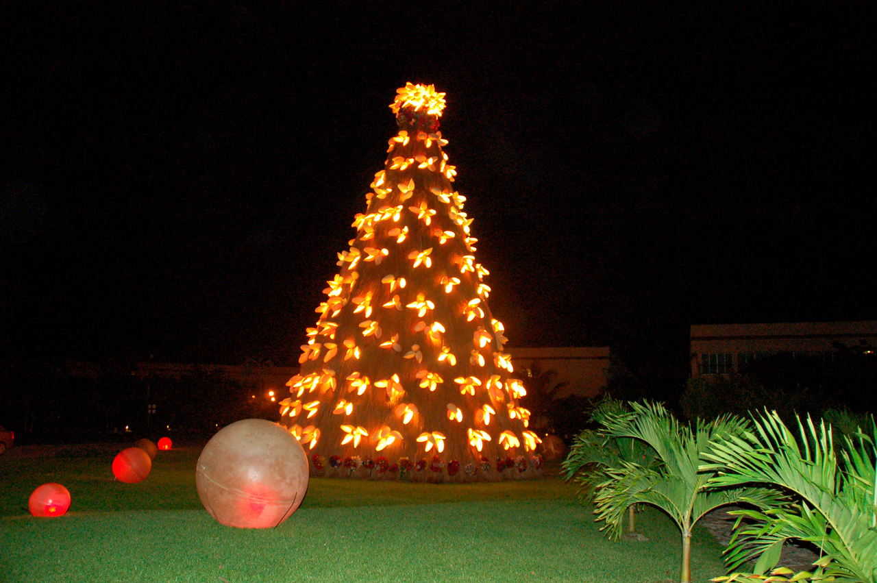 Back home from Playa del Carmen - Christmas tree lights. Beautiful night decided to walk back  to our building.........