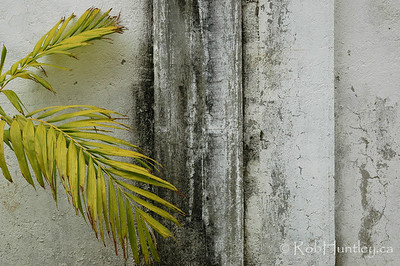 Detail of weathered stucco wall and palm frond in Huatulco, Mexico. © Rob Huntley
