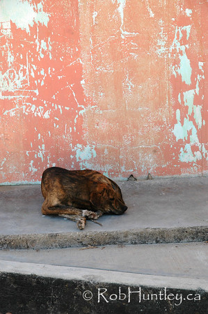 Life on the street. Street dog in Santa Maria Huatulco, Mexico. © Rob Huntley