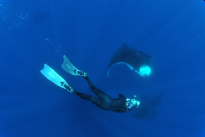 © Joseph Dougherty. All rights reserved.   Manta birostris   Walbaum, 1792 Giant Manta Ray  Underwater photographer, Lee Arbo, with manta rays.