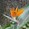 Bird of Paradise at the House of Frida Kahlo, Mexico City, Mexico