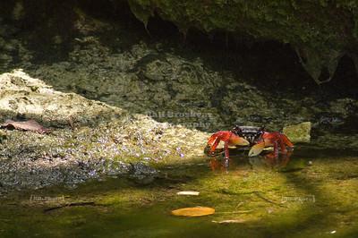 Crab Xel-Ha, Yucatan, Mexico