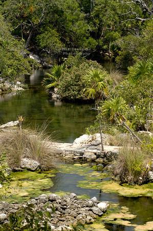 Jungle landscape in Xel-Ha, Yucatan, Mexico