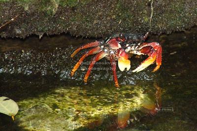 Crab under a rock Xel-Ha, Yucatan, Mexico