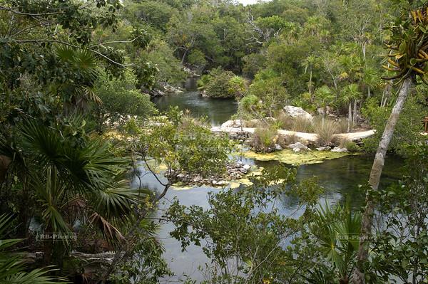 River in Xel-Ha, Yucatan, Mexico