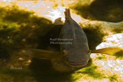 Fish in a natural pond at Xel-Ha, Yucatan, Mexico