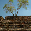 Tree and stone wall and stairs at Monte Alban, Oaxaca, Mexico.<br /> © Rob Huntley