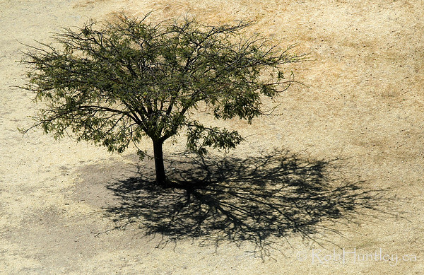 Tree and Shadow at Monte Albán, Oaxaca, Mexico. © Rob Huntley
