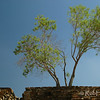 Tree and stone wall and stairs at Monte Alban, Oaxaca, Mexico. © Rob Huntley
