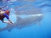 Marsha with whale shark