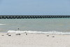Longest pier in the world, 6.5 km, Progresso, Mexico
