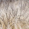Dry grasses and branches.