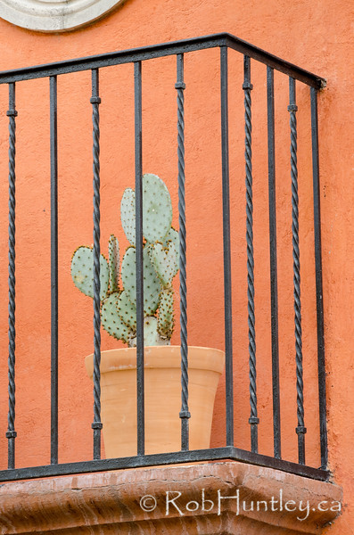 Potted cactus on a balcony.