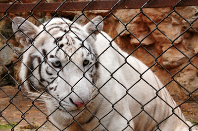 Mérida zoo - sad conditions for some of the animals...