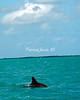 Dolphin-02539