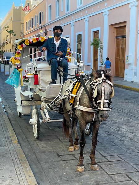 Horse Driven Carriage - Merida, Mexico