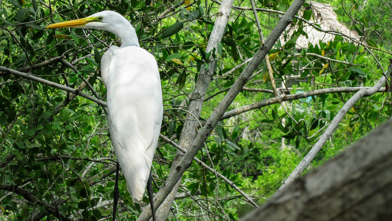 Bird in La Manzanilla Mangrove Swamp