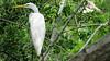 Bird in La Manzanilla Mangrove Swamp