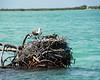 Osprey nest-02522