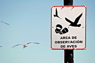 Aves, Loreto