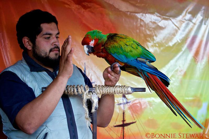 Bird in a Conservatory Program