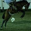 Riding a wild horse