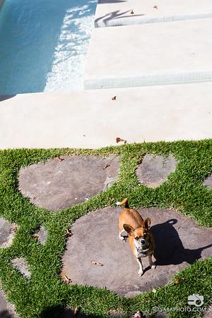 Lita, the beach dog