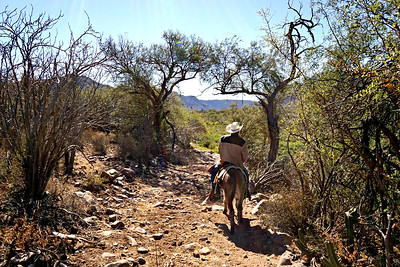 Mule riding in the Gigantes Mountains on the way to San Javier, Mexico with our guide Raul