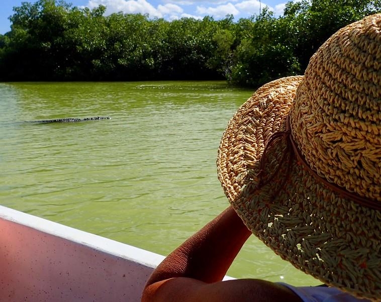 Big Crocodile in Rio Lagartos