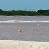 Flamingos feeding in salt ponds