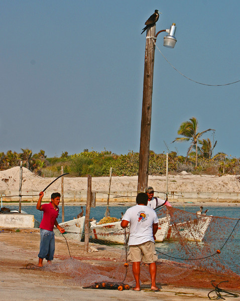 Fishermen beat the nets free of seaweed as a frigate bird waits for a left over.