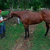 This is a great looking horse that is in peak condition.