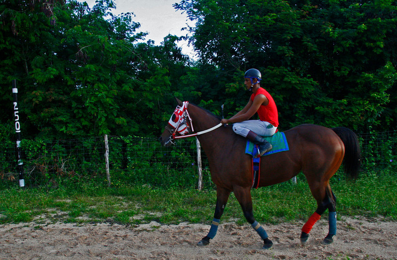 The horse is exercised by a professional jockey.