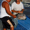 A fisherman sells some of his fresh squid to a interested buyer.