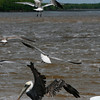 Birds abound because there is still pretty good fish populations in the estuaries.