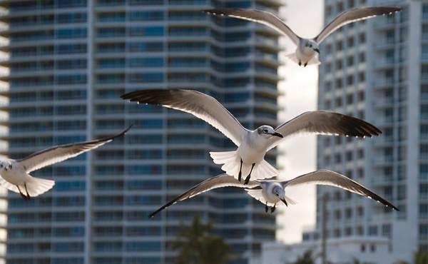 Miami Beach 12/2008