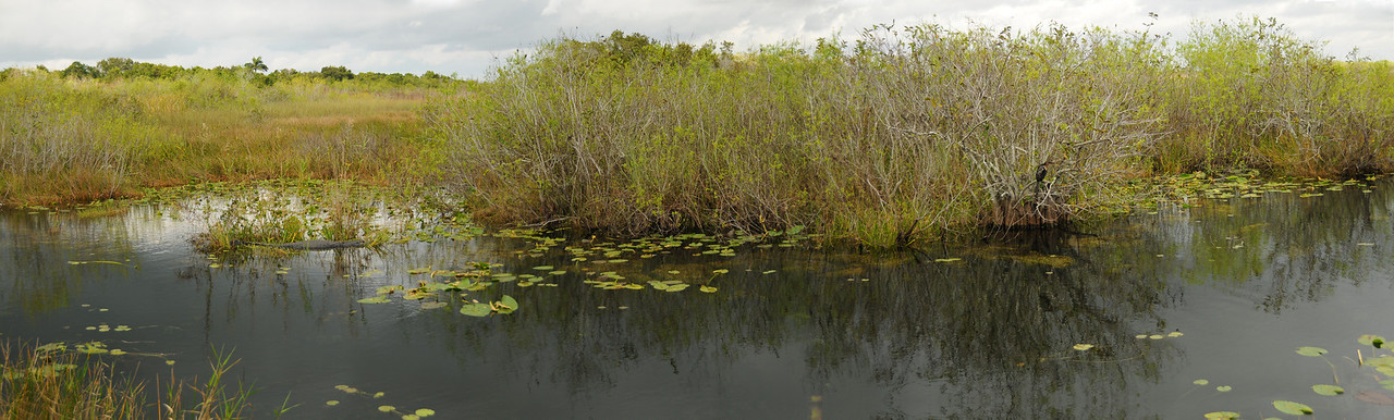 View of Everglades along Anhinga Trail - December 2012