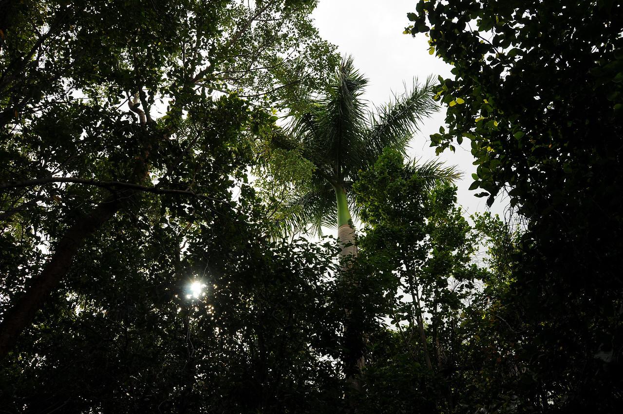 View of Everglades along Anhinga Trail, Florida Everglades - December 2012