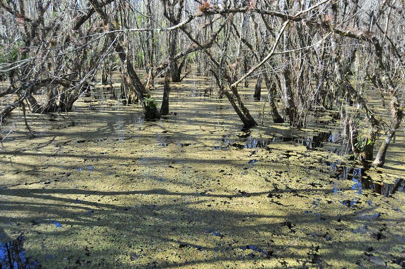 Florida Everglades - December 2012