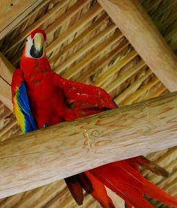 Everglades - Cute parrot