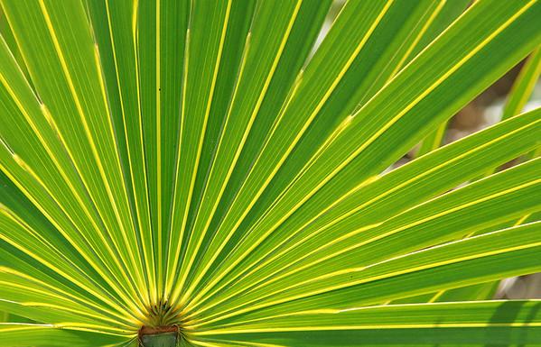 Everglades National Park: Flora