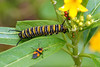 I guess these colorful Caterpillars are what turn to the colorful Butterfiles that we saw