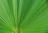 The Palm Leaf spread.