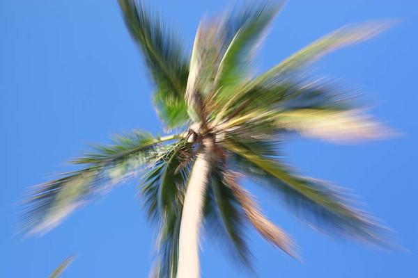 PalmTrees(resized)_0008