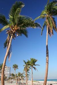 PalmTrees(resized)_0002