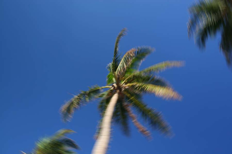 PalmTrees(resized)_0009