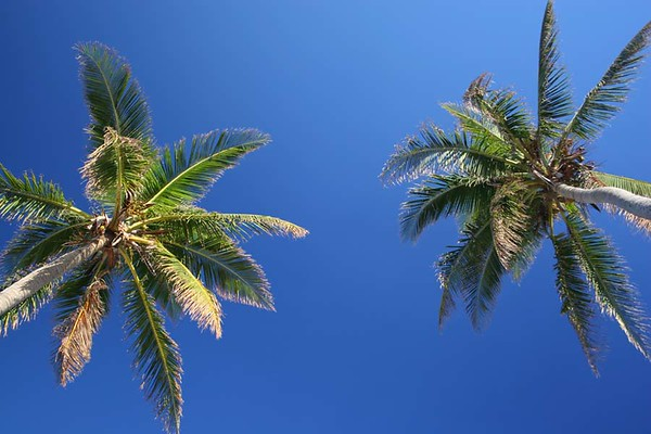 PalmTrees(resized)_0006