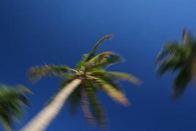 PalmTrees(resized)_0010