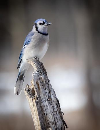 Birds at Kensington Park, Michigan, Winter